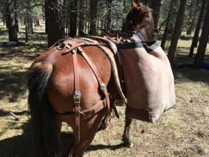 Utah-style paniers on a Phillips Formfitter pack saddle